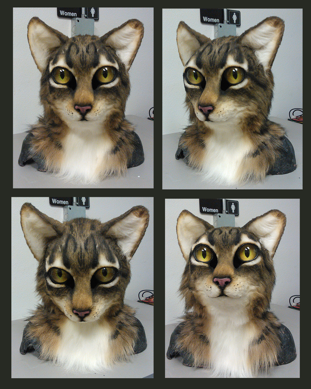 pictures of cats
