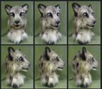 Snow Leopard Turnaround
