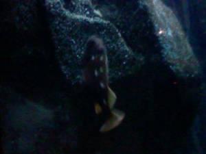 Oregon Coast Aquarium - Fish 27