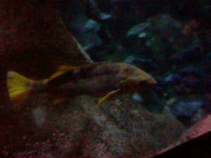 Oregon Coast Aquarium - Fish 28