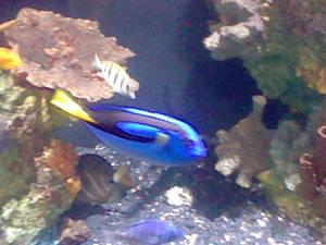 Oregon Coast Aquarium - Fish 29