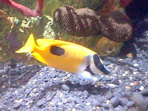 Oregon Coast Aquarium - Fish 30
