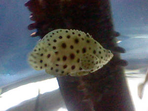 Oregon Coast Aquarium - Fish 33