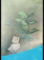 25.12-Tea by Hakaya