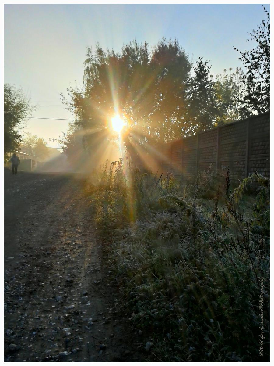 Frosty morning by swiftach