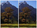 3D.maple - crossview by yatu-ex