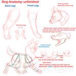 Dog Anatomy- Unfinished