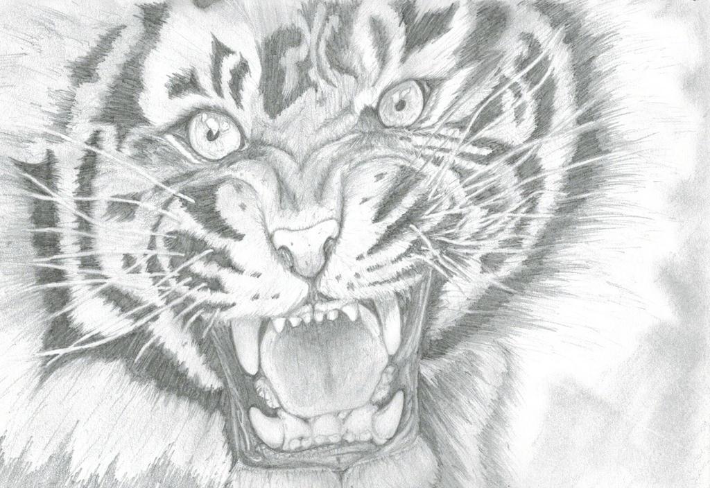 angry animal drawing - photo #32