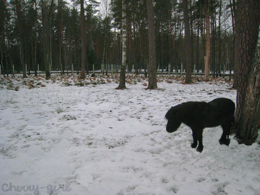Belovezhskaya Pushcha (Forest). by cherrygir1