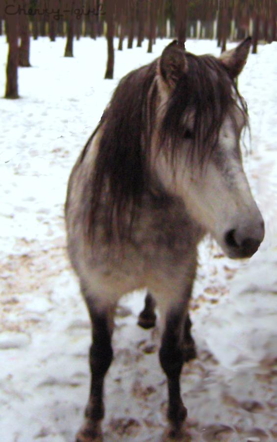 Belovezhskaya Pushcha (Forest). Horse. by cherrygir1