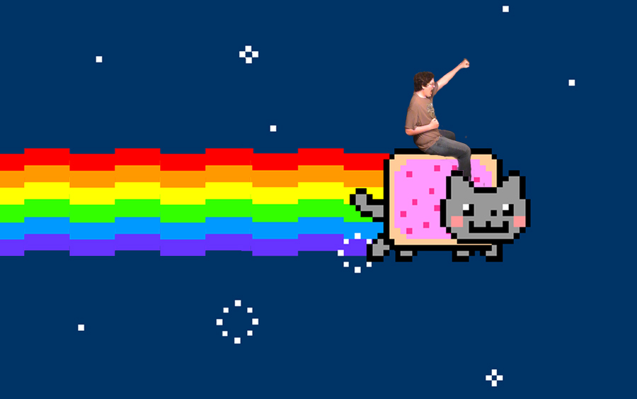 Cat Meme Wallpaper Hd