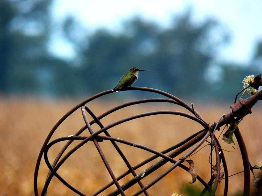 Humming bird by elijahvivio1996