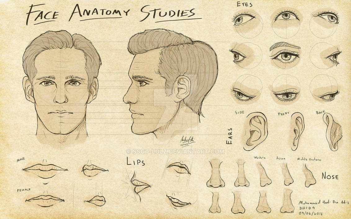 3Dsense - Face Anatomy Studies by SSgt-LuLZ on DeviantArt
