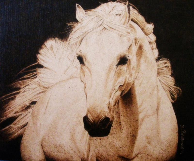 White horse by tikvaart