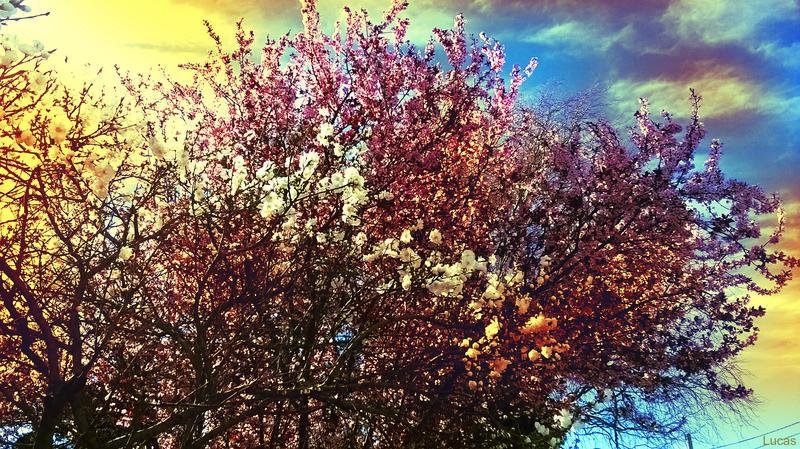 Isletas Amarillas Sobre Flores Rosas by Guner09
