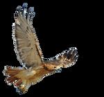 Bird precut