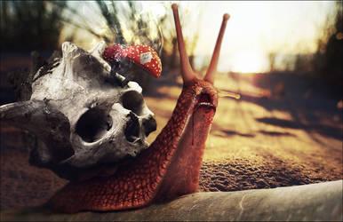 (2014) Anubiz Snail 003 by rycerickz