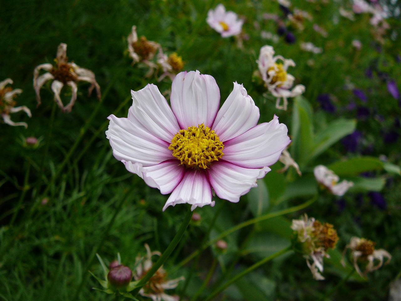 http://fc01.deviantart.net/fs17/i/2007/220/9/f/A_Living_Flower_Among_the_Dead_by_Enchantedgal_Stock.jpg
