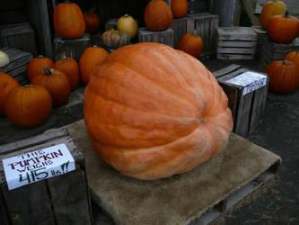 Huge Pumpkin Halloween Stock by Enchantedgal-Stock