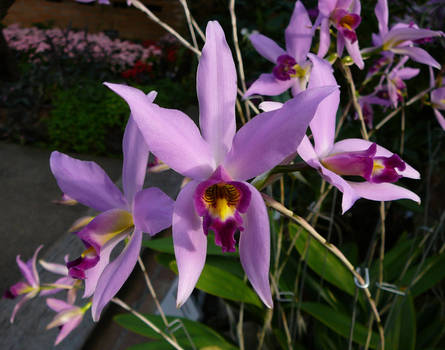 Purple Orchid Flowers Stock