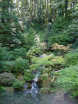 Japanese Waterfall Trees Stock