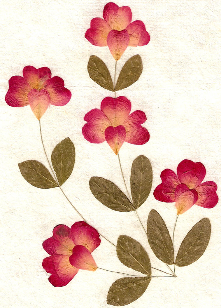Pressed Flowers and Leaves by Enchantedgal-Stock on DeviantArt