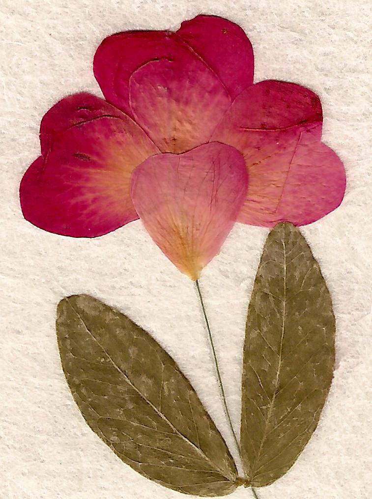 Dried Leaf Flower Texture 2