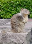 Squirrel Animal Stock Photo