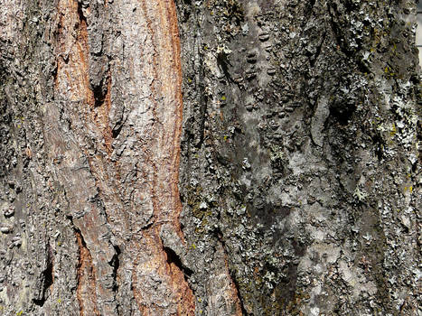 Wood Bark Texture Stock