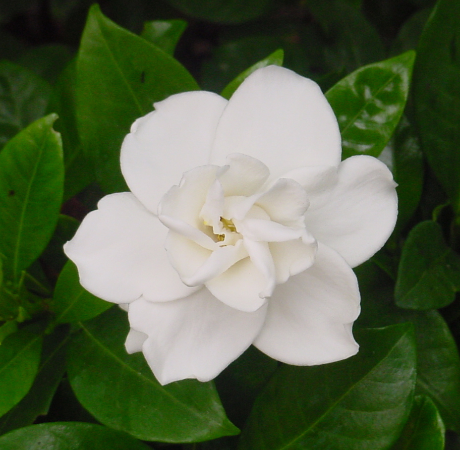 Beautiful White Flower Stock By Enchantedgal Stock On Deviantart
