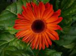 Orange Flower and Leaves Stock
