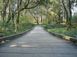 Wooden Path Forest Background
