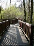 Wood Bridge Park Background