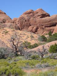 Desert Trees Background Stock