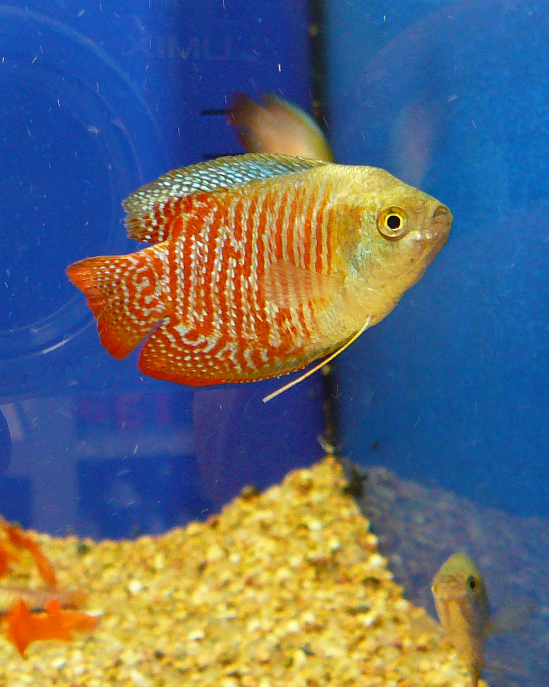 Pet fish pictures