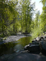 River Trees n Rocks Background by Enchantedgal-Stock