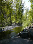 River Trees n Rocks Background
