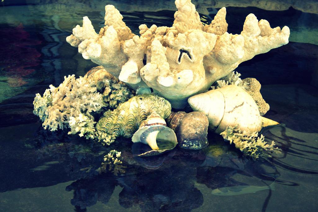 Shell Life by Adraya