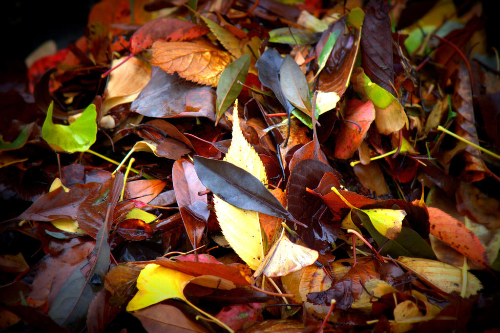 Wet Fall by Adraya