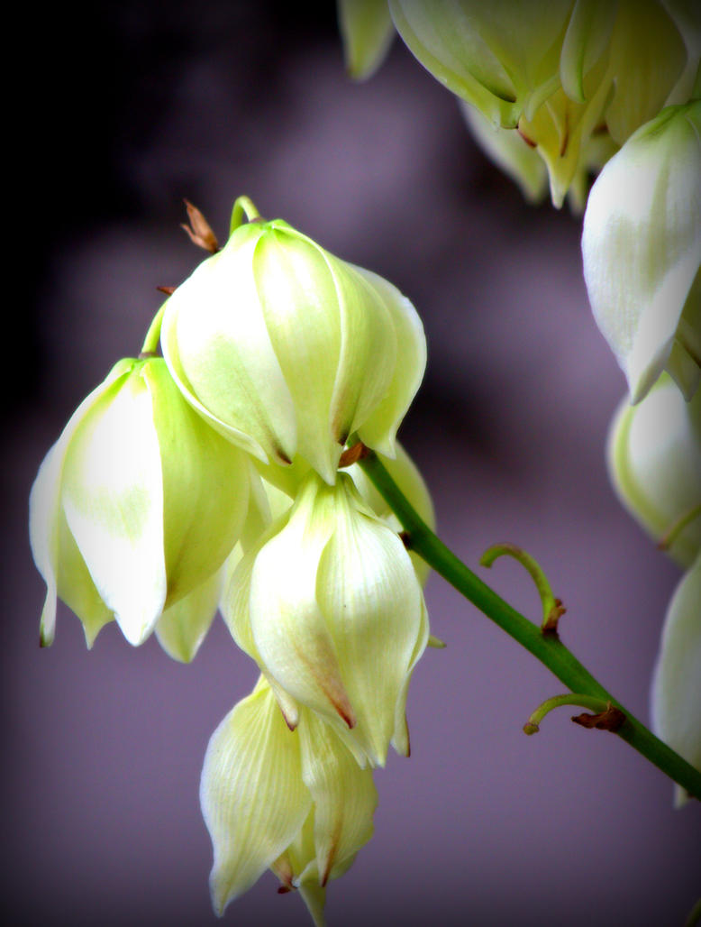 Sad Blooms by Adraya