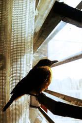 Nostalgic bird