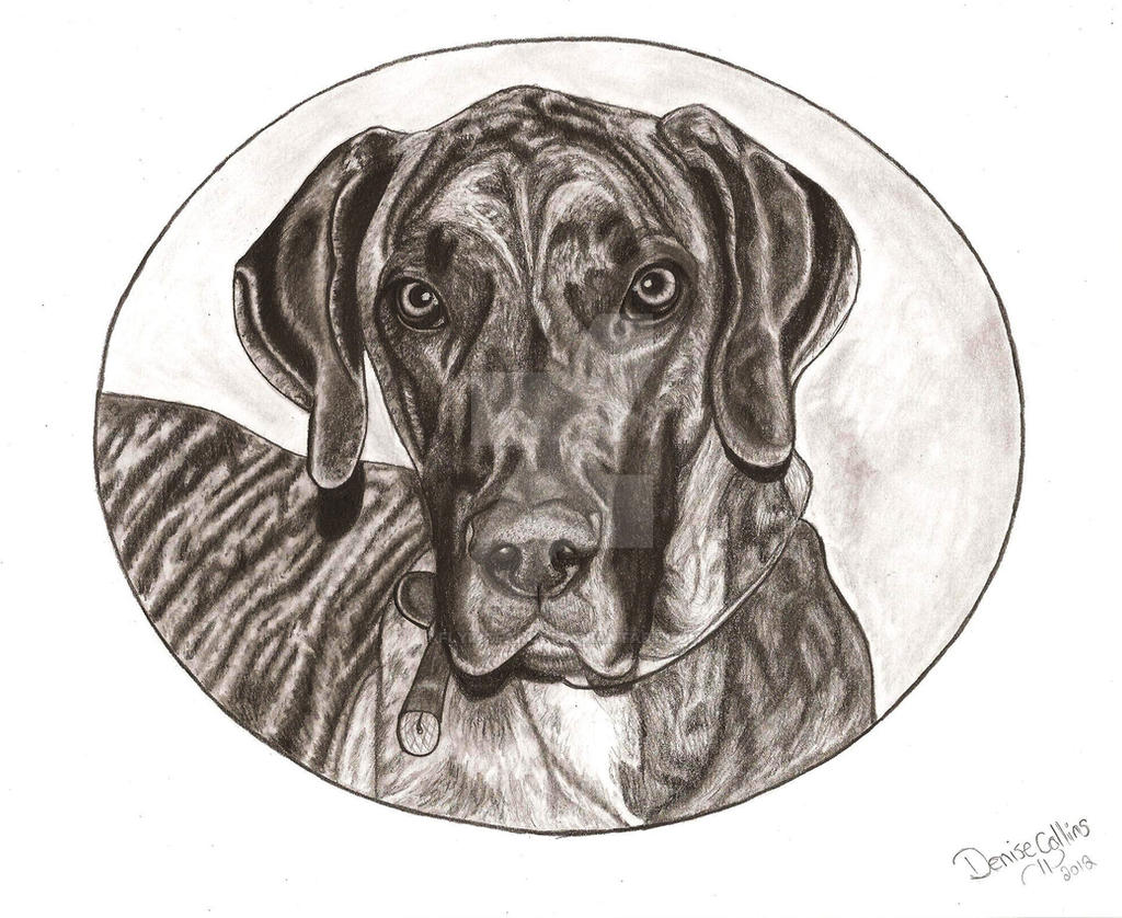 Great Dane by FlyingFancy1