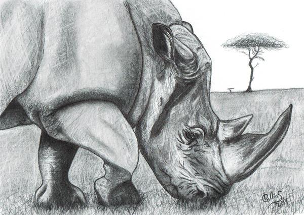 Rhino by FlyingFancy1