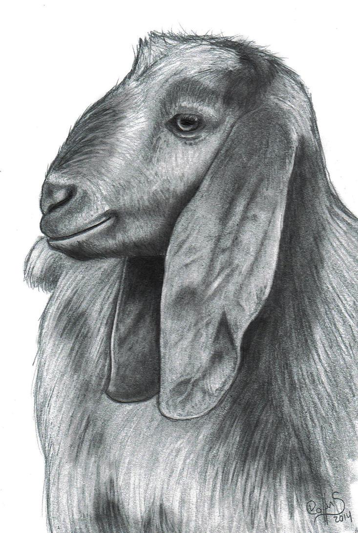 Goat! by FlyingFancy1