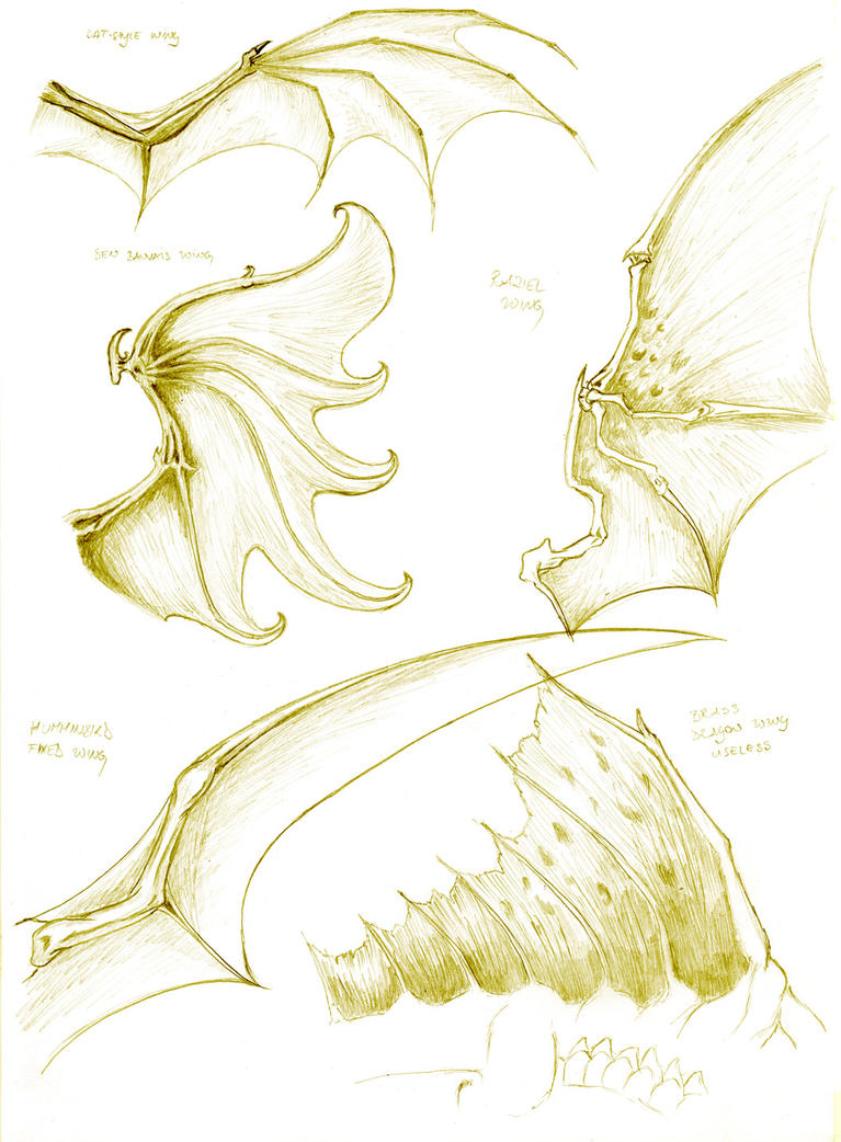 Dragon anatomy- wing study by turel on DeviantArt