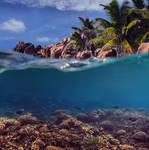 Split near a tropical island by fly10