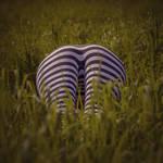 Zebra meets friends
