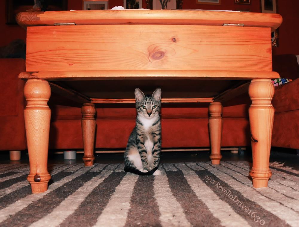 cat clawing carpet