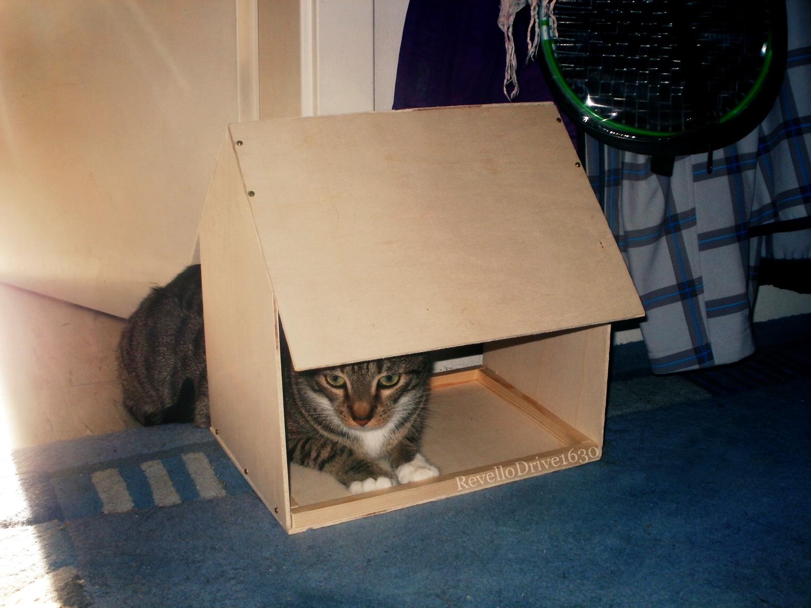 Da Kat in da house by RevelloDrive1630