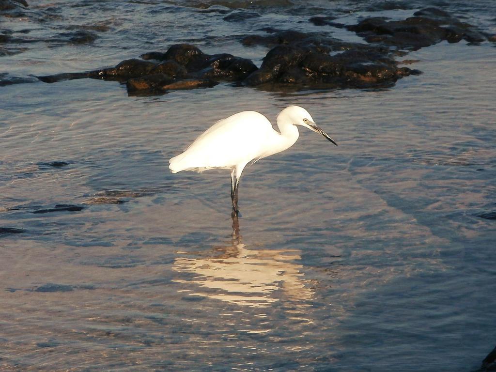 White egret by RevelloDrive1630